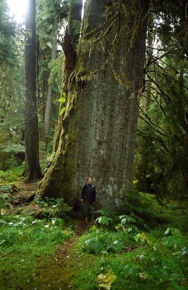 De auteur aan de voet van een reuzenceder in British Columbia.
