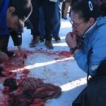 Een vrouw van de Inuïtbevolking in noordelijk Canada eet rauw zeehondenvlees.