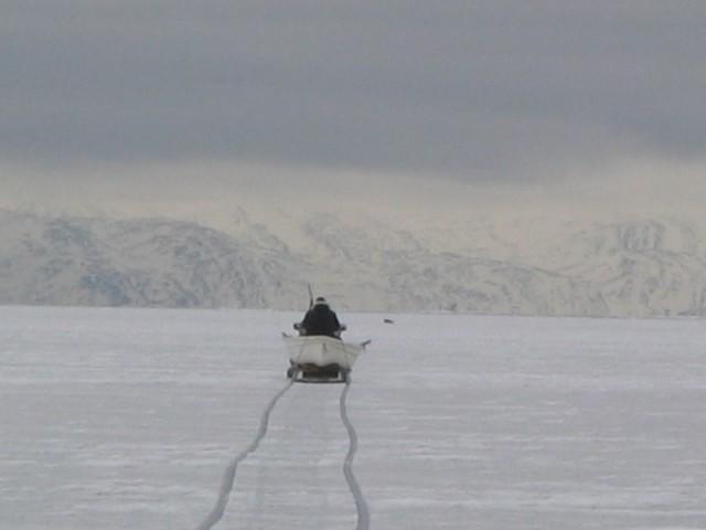 Jager Kango nadert zijn prooi, een zeehond op het ijs.