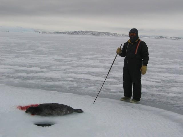 Jager Joshua Kango met zijn prooi. De zeehond was door het gat in het ijs naar boven gekomen.