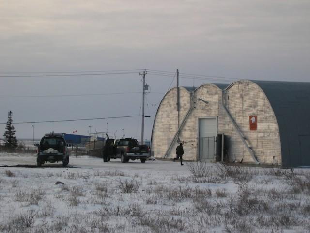 Een verdoofde beer uit de 'ijsberengevangenis' in Churchill ligt verdoofd klaar voor transport per helikopter naar de toendra.