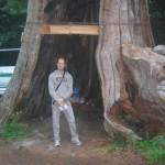 De auteur bij de Holle Boom van Stanley Park in Vancouver.