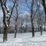 Winter Montreal